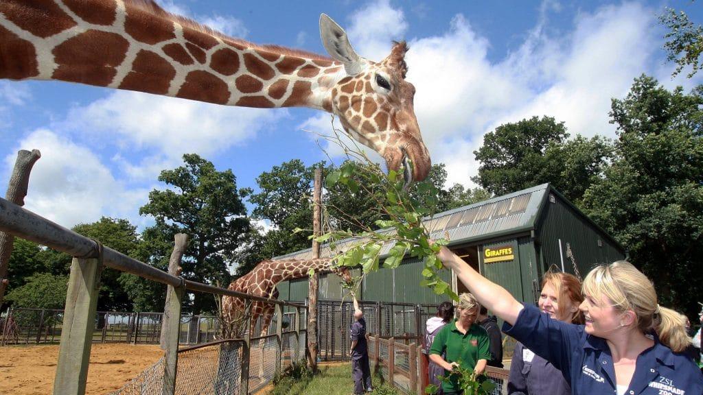 Comment travailler dans un zoo sans diplôme ?